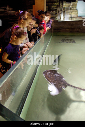 Families and children looking at the fish inside the London Aquarium, South Bank, London UK - Stock Photo