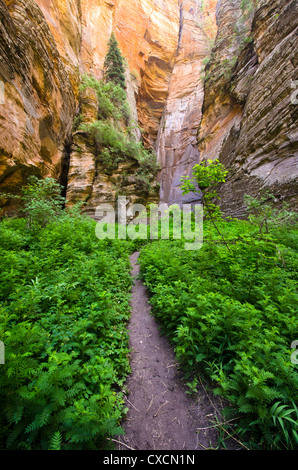 A remote and wet hike with swimming and wading through a Coconino Sandstone canyon. - Stock Photo