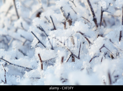 Winter landscape. - Stockfoto