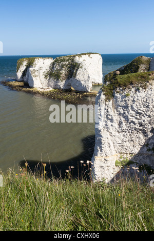 Old Harry Rocks at Handfast Point, Studland on the Isle of Purbeck, Jurassic Coast of Dorset England. - Stockfoto