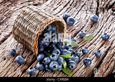 Blueberries have dropped from the basket on an old wooden table. - Stock Photo