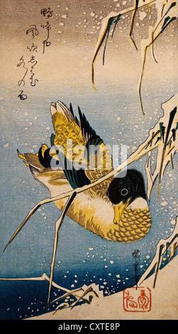 Mallard Duck and Snow-covered Reeds Utagawa Hiroshige Japanese 1797–1858)  Edo period 1832 Japan 38.1 x 17.5 cm - Stock Photo