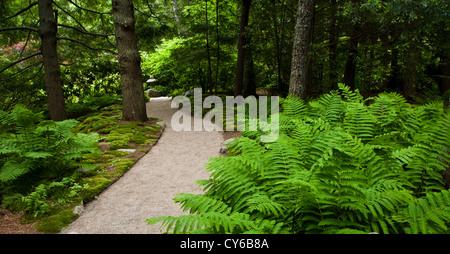 Winding garden path through Asticon Azalea Japanese garden of trees with ferment in the foregrou, Seal Harbor, Maine, - Stockfoto