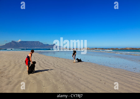 Dogs being walked along a beach in Cape Town South Africa with Table Mountain in the background. - Stock Photo