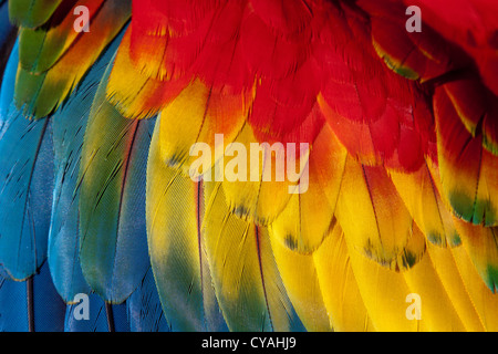 Macaw feathers - Stock Photo