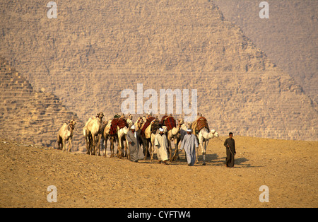 Egypt, Giza near Cairo, Camel drivers in front of pyramids. - Stockfoto