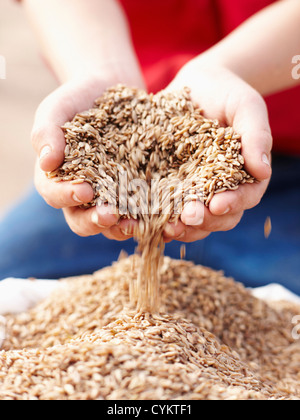 Farmer pouring handful of barley seeds - Stock Photo