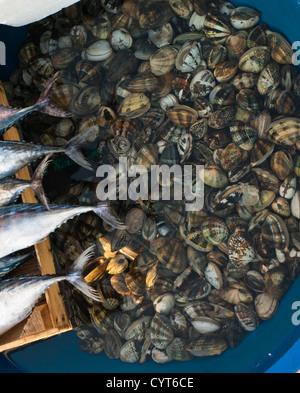 Morning fish market in Kumkapi Istanbul Turkey, fish straight off the boats, tails of Atlantic bonito and basin - Stock Photo