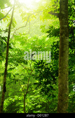 Tropical green forest with ray of light. - Stock Photo