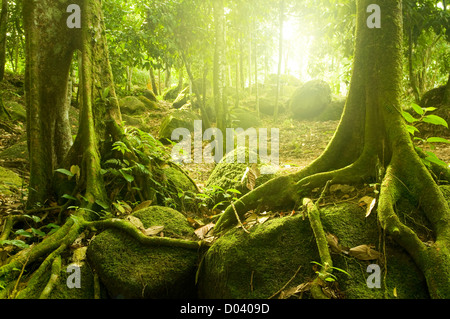 Green forest with ray of light - Stock Photo