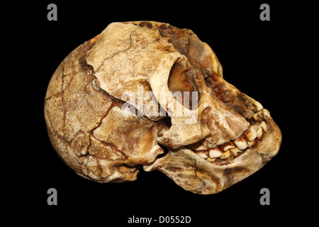 homo floresiensis the hobbit 2016-3-31 homo floresiensis one of the most controversial and surprising hominin finds in a century.