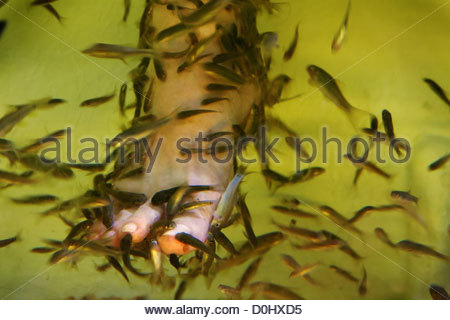 A close up of a fish pedicure spa massage near the night for A salon called fish