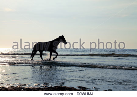 Horse in the sea - Stock Photo