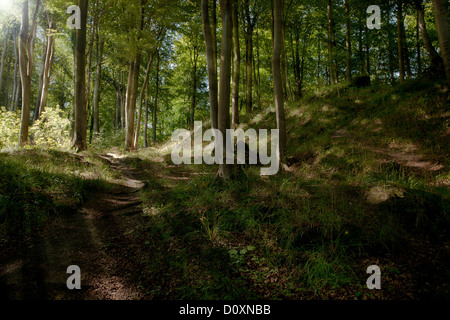 Sunbeams through a forest - Stock Photo