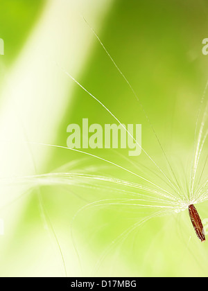 abstract dandelion flower background, extreme closeup with nice background color - Stock Photo