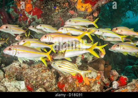 School of fish at underwater reef - Stock Photo