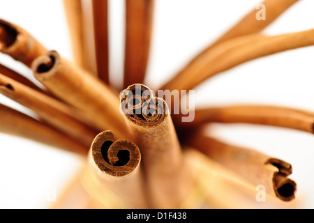 Cinammon sticks on white background - Stock Photo