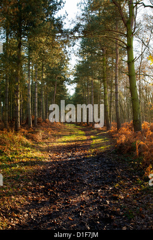 Autumn Color in a wood - Stock Photo