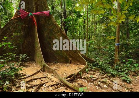 Regenwald, Tiger Cave Temple (Wat Tham Suea), Provinz Krabi, Thailand, Südostasien, Asien - Stockfoto