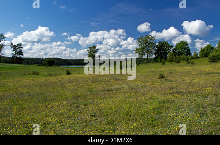 Big meadow covered with summer flowers. - Stock Photo