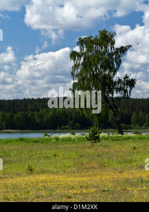 Birch-tree on the summer meadow with the view on lake Kielarskie in sunny summer day. - Stock Photo