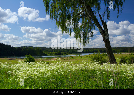 Birch-tree on the summer meadow with the view on lake Kielarskie. - Stock Photo