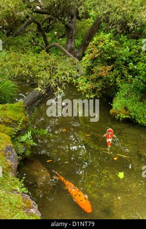Japanese garden and koi pond stock photo royalty free for Koi pond kelowna