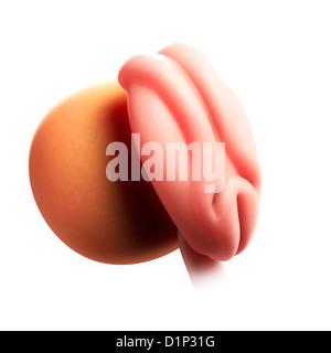 Embryo at 4 weeks, artwork - Stock Photo