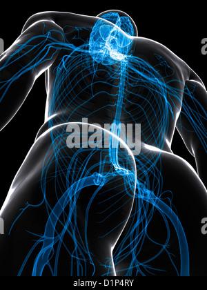 Central nervous system, artwork - Stock Photo