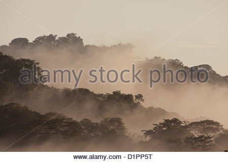 Mist at daybreak in the rainforest of Soberania national park, Republic of Panama. - Stockfoto
