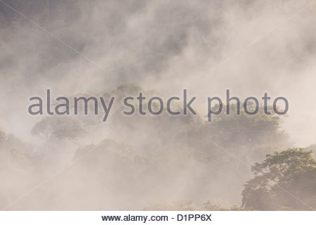 Mist at daybreak in the rainforest of Soberania national park, Republic of Panama. - Stock Photo
