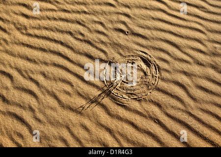 Morocco, M'Hamid, Erg Chigaga sand dunes. Sahara desert. Detail ripple-marks. Little bush making marks in sand due - Stockfoto