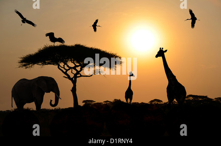 Animals silhouettes standing over sunset on safari in Africa. Elephant, Giraffes, Birds - Stock Photo