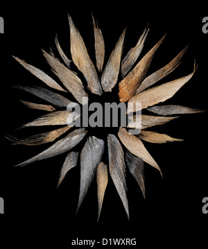 Shards of Indian coconut palm tree bark husk on black background in sun or flower shape - Stock Photo