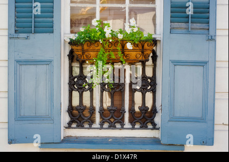 A window box of flowers and blue shutters on a house in the French Quarter in New Orleans, Louisiana. - Stock Photo