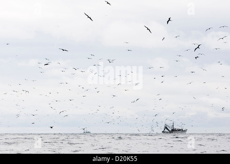 Seabirds and fishing boats in the Pacific, Salango, Manabi, Ecuador, South America - Stock Photo
