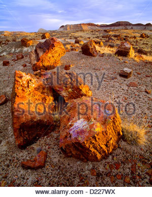 Petrified wood at sunrise, at Long Logs. Petrified Forest National Park, Arizona. - Stock Photo
