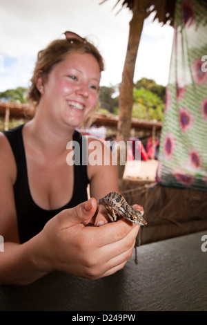 Madagascar, Operation Wallacea, student holding Chameleon Furcifer Angeli in hands - Stock Photo