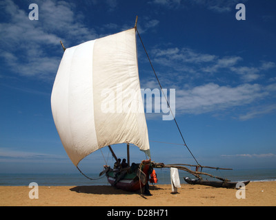 Sri Lankan fishing boat with stabilising outrigger on the beach at Negombo with bright white sail contrasting against - Stock Photo