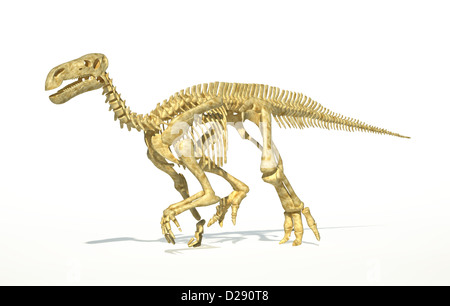 Iguanodon dinosaur full skeleton photo-realistic and scientifically correct, perspective view. On white background - Stock Photo