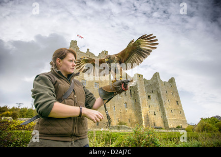 Woman with hawk and gauntlet outdoors - Stock Photo