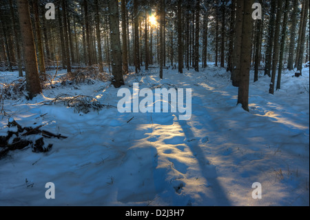Sunset in a snowy forest, light spots and tree shadows on snow - Stock Photo