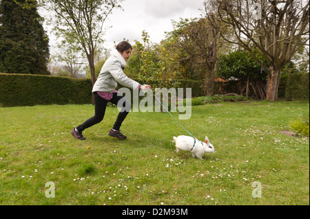 Teenager girl walking an English butterfly white rabbit on a lead on a lawn with daisies with harness - Stockfoto