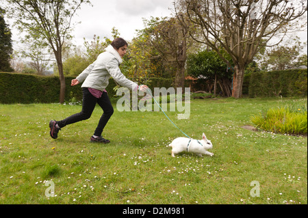 Teenager-Mädchen zu Fuß einen englischen Butterfly weiße Kaninchen an der Leine auf einer Wiese mit Gänseblümchen - Stockfoto
