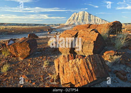Petrified wood and badlands, Long Logs Trail, Petrified Forest National Park, Arizona USA - Stock Photo
