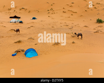 A desert camp with camels and tents at Erg Chebbi dunes near Merzouga, Morocco, North Africa - Stock Photo