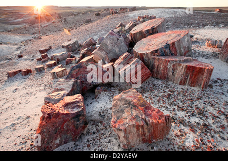 Alien Landscape, Petrified Logs, Petrified Forest National Park, Arizona - Stock Photo