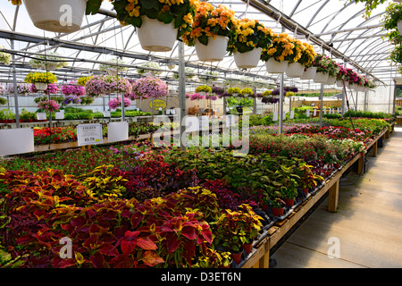 Commercial greenhouse flower nursery domestic flowers for Domestic garden ideas
