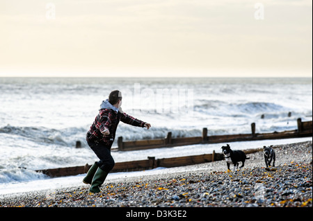 A man throwing a ball for 2 dogs on a beach - Stock Photo