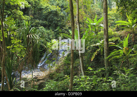 Malaysia, Kedah, Langkawi Island, tropical rain forest, trees, - Stock Photo